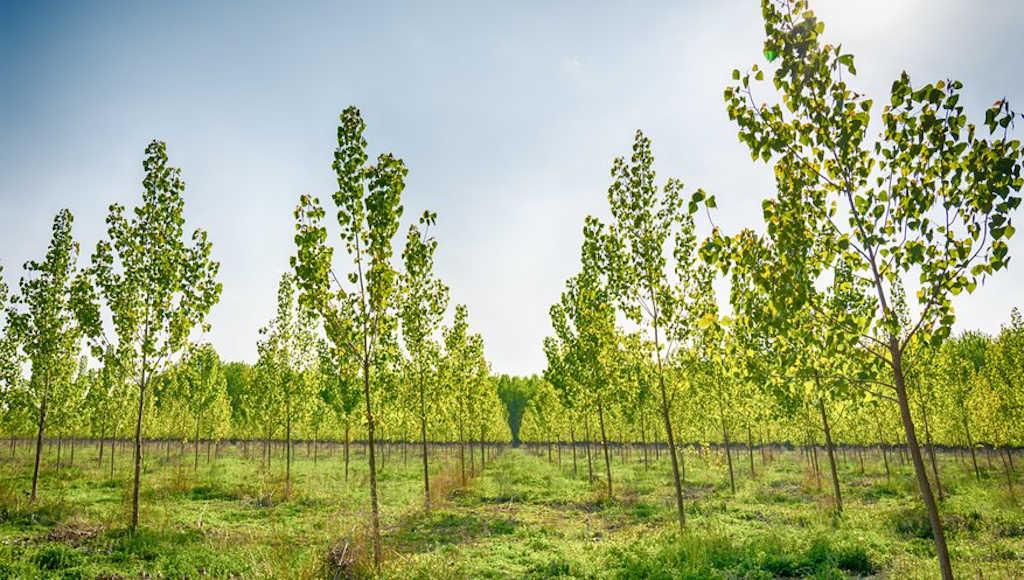 ağaçlandırmanın çevreye faydaları