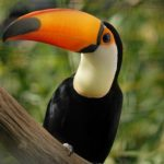 dünyadaki en pahalı kuş türleri